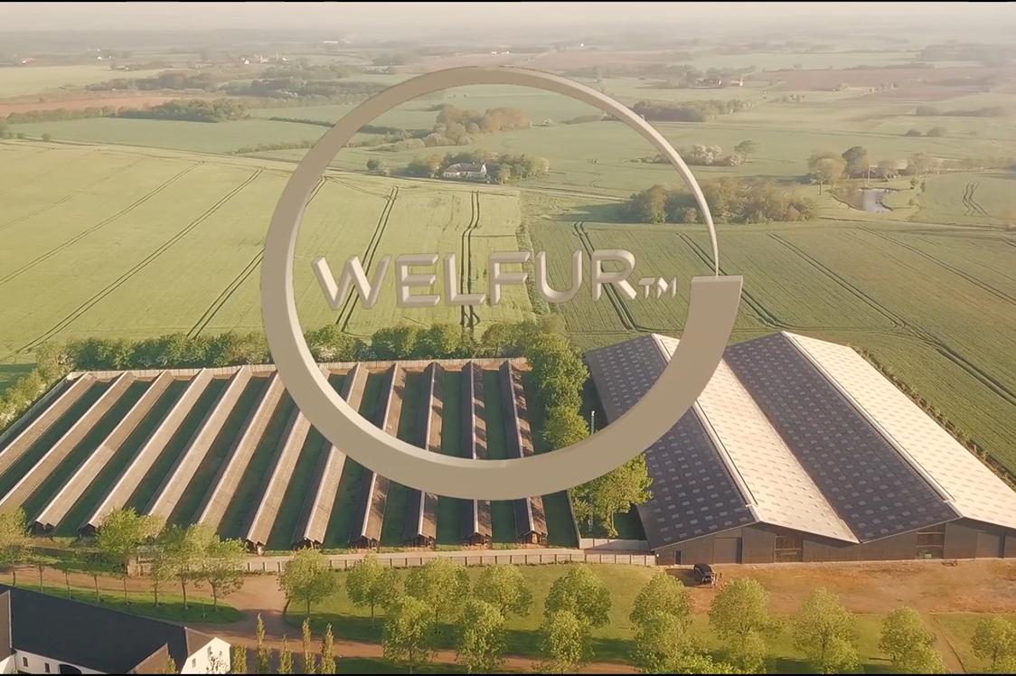 Video: How We Ensure Good Animal Welfare with WelFur