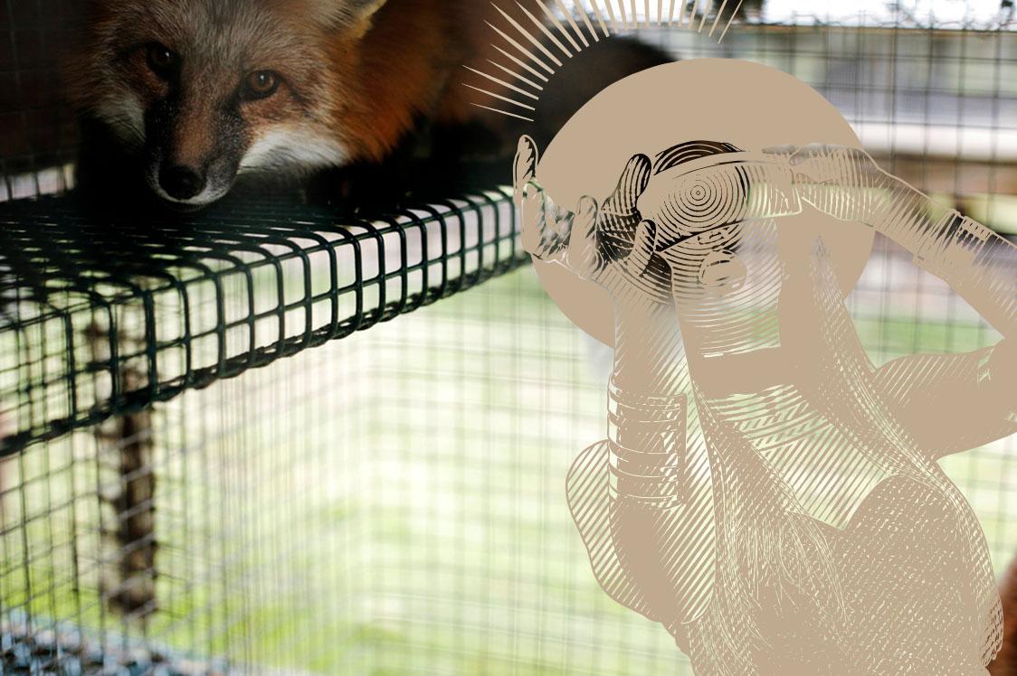Take a 360° VR Tour Around a Fox Farm